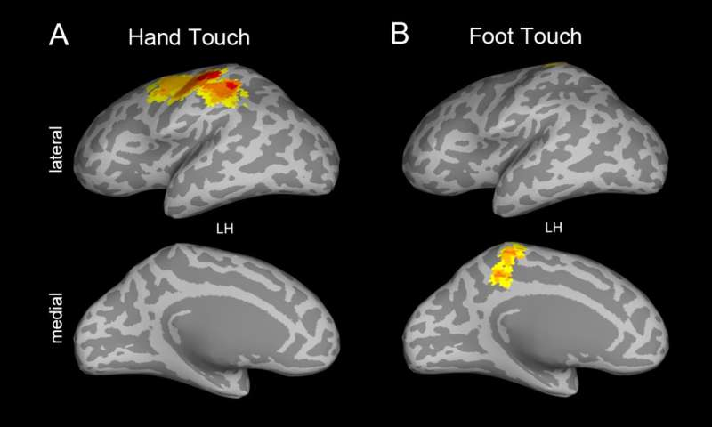 A 'touching sight': How babies' brains process touch builds foundations for learning