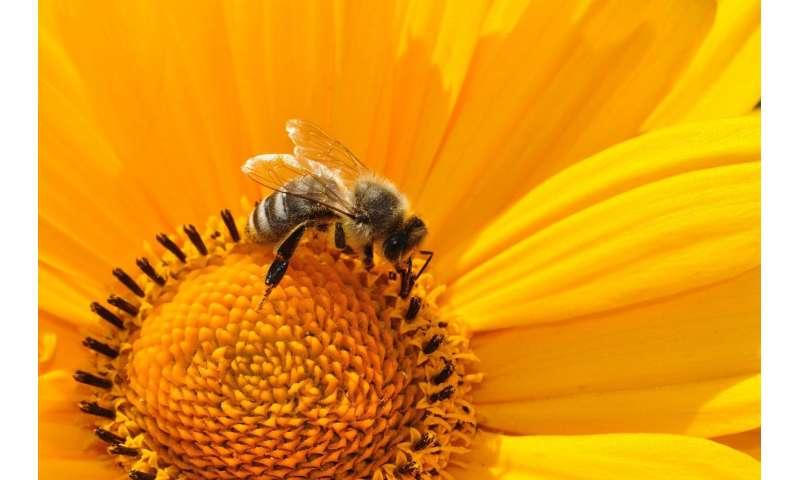Strategies of a honey bee virus