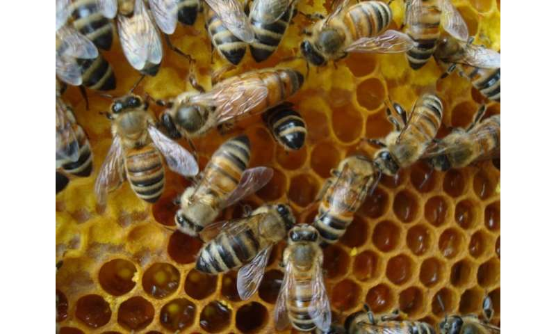 Bees get stressed at work too (and it might be causing colony collapse)