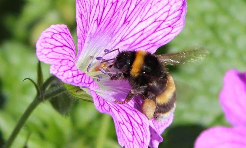 Bin the bug spray: Study shows EU pesticide ban failing to protect suburban bees