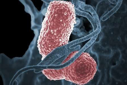 Biomarker is discovered for a flesh-eating pathogen that can blind or kill healthy young people