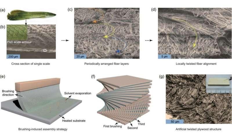 Biomimetic micro/nanoscale fiber reinforced composites