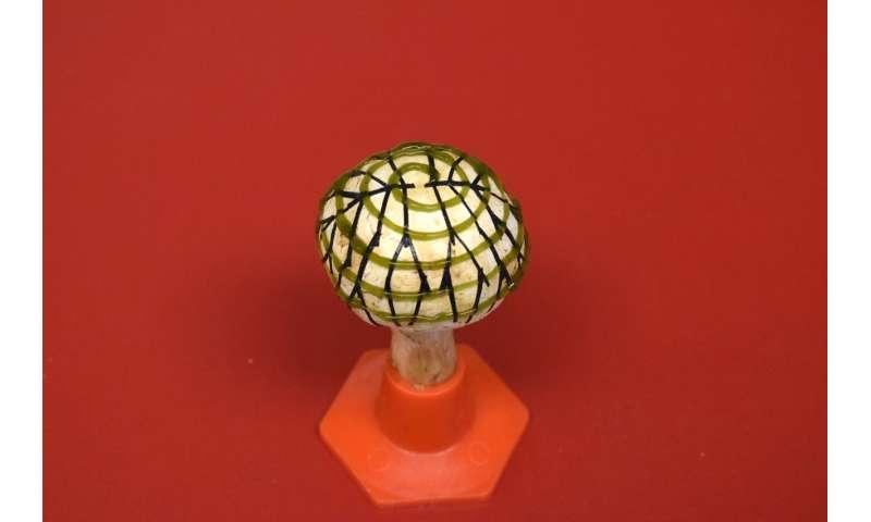 'Bionic mushrooms' fuse nanotech, bacteria and fungi