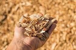 Bioplastics sourced from wood