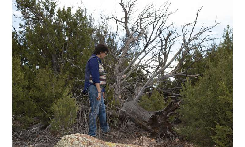 Bird communities dwindle on New Mexico's Pajarito Plateau