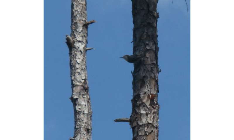 Bird feared extinct rediscovered in the Bahamas