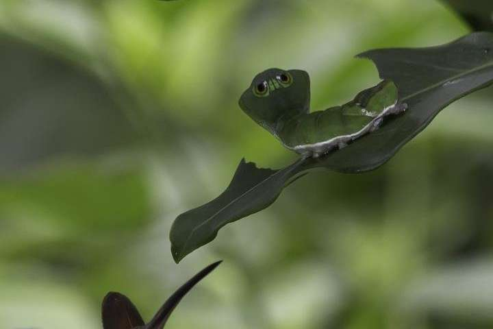 Birdscan mistakesome caterpillars for snakes; canrobots help?
