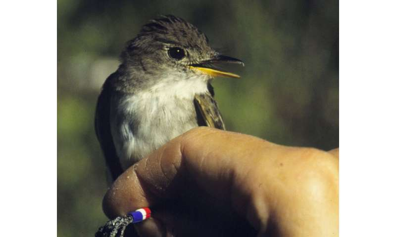 Birds play the waiting game in tough environmental conditions