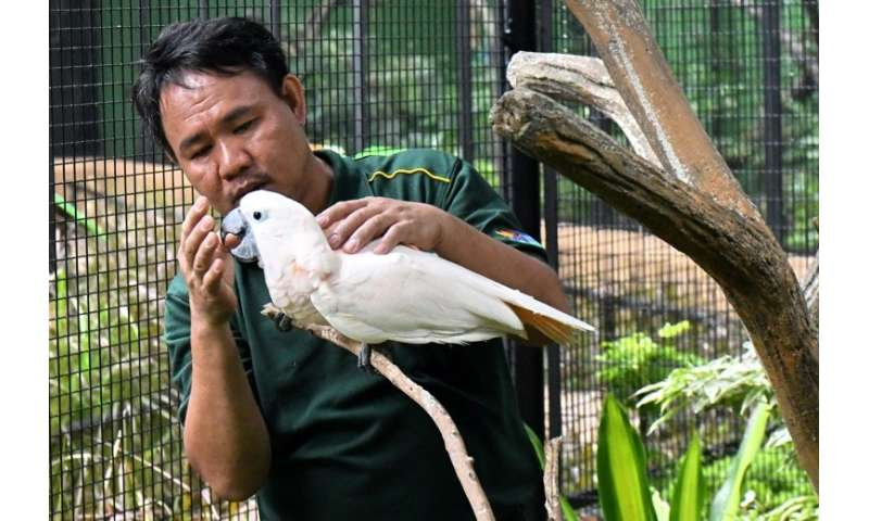'Bird whisperer' Razali Bin Mohamad Habidin checks a salmon-crested cockatoo at Jurong Bird Park in Singapore, where he is deput