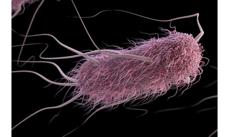 Blood type affects severity of diarrhea caused by E. coli