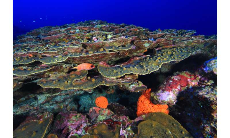 Boring barnacles prefer the shallow life on coral reefs