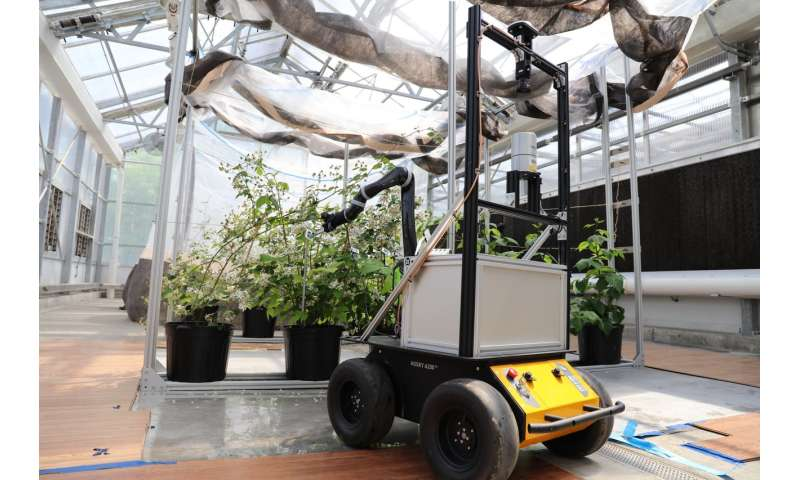 BrambleBee: An autonomous robot to pollinate bramble plants