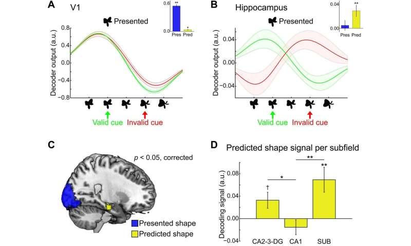 Bridging the gap between human memory and perception