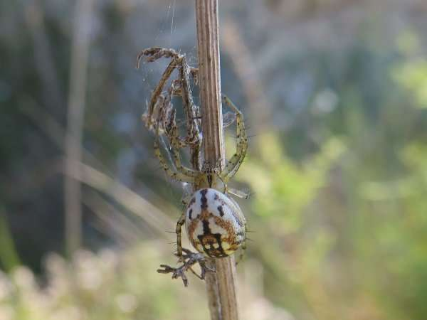 Broading the biodiversity catalogue of spider populations in the Iberian Peninsula