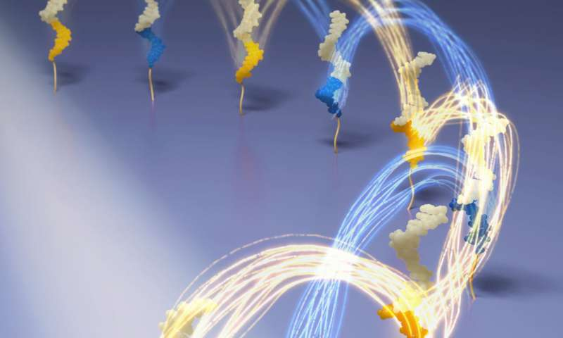 Built for speed: DNA nanomachines take a (rapid) step forward