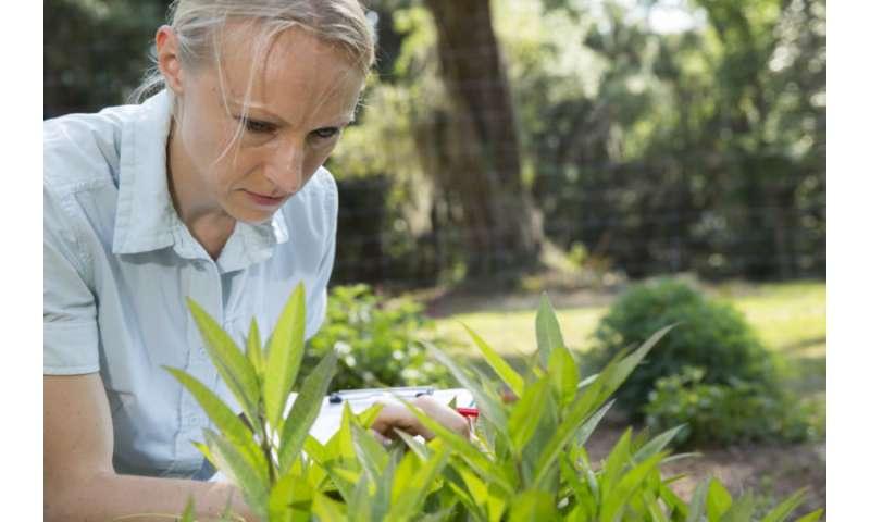 Los jardines de mariposas ofrecen algo de esperanza a los polinizadores