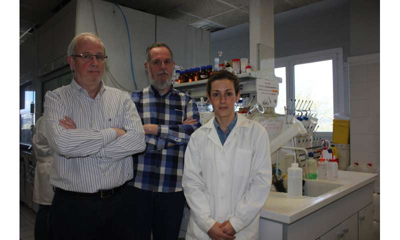 C9h peptide capped to induce cancer cell apoptosis