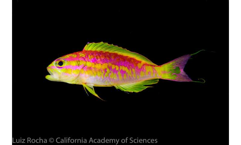 California Academy of Sciences discovers new species of dazzling, neon-colored fish