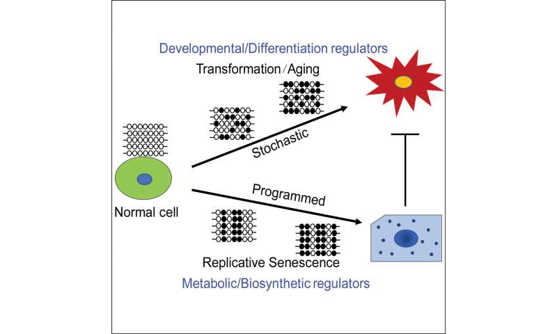 Cancer risk associated with key epigenetic changes occurring through normal aging process