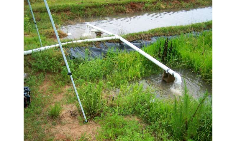 Can rice filter water from ag fields?
