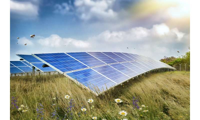 Can solar energy save the bees?