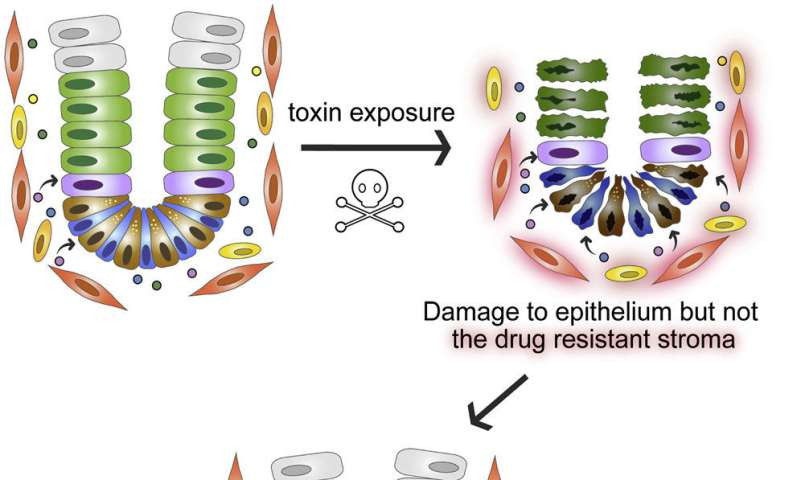 Cellular pumps protect the gut from toxins