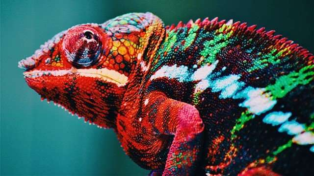 Chameleon-inspired nanolaser changes colors