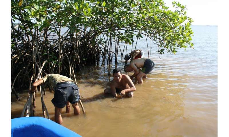 Clams and cockles, sentinels of the environmental status of Nicaraguan coasts
