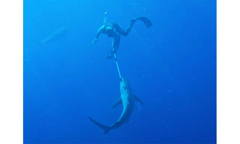 Clarke Gayford, partner of New Zealand Prime Minister Jacinda Ardern, fends off a a shark with a pole as a  dolphin looks on in