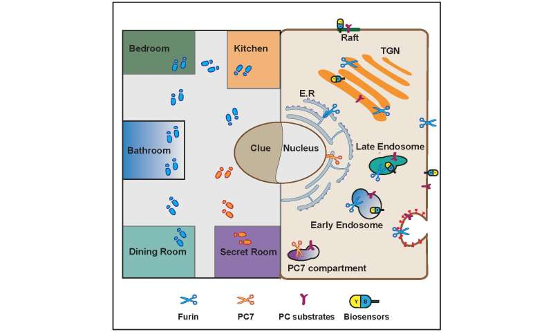 Cluedo in the cell: Enzyme location controls enzyme activity