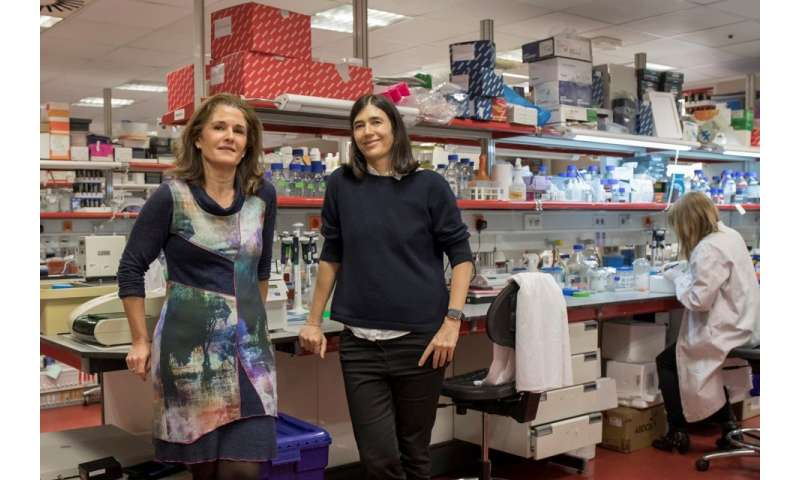 CNIO researchers cure lung fibrosis in mice with a gene therapy that lengthens telomeres