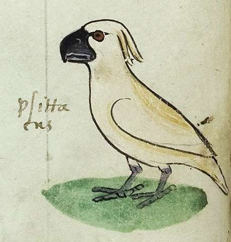 Cockatoo discovery reveals flourishing medieval trade routes around Australia's north