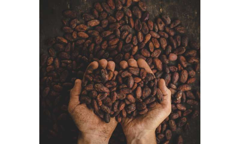 Cocoa bean roasting can preserve both chocolate health benefits, taste
