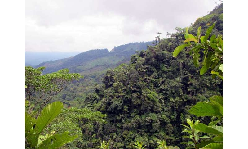 Colombia peace deal brings new threat to country's rainforest