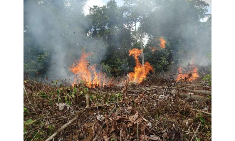 Colombia tropical forest fires spike after 2016 Peace Accords