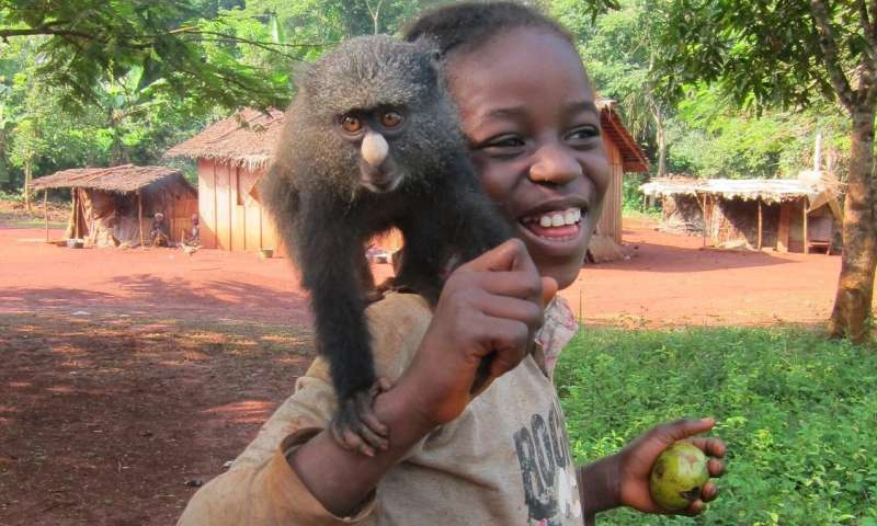 Contact with monkeys and apes puts populations at risk