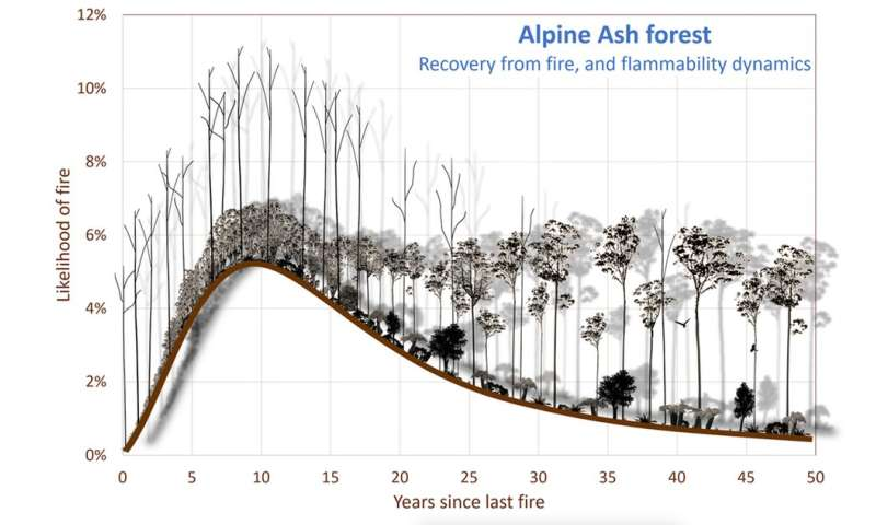 Contrary to common belief, some forests get more fire-resistant with age