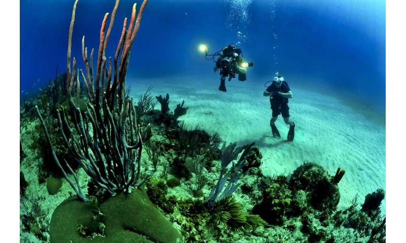 شبکه های غذایی دریایی و اکوسیستم با افزایش دما و تغییرات آب و هوا از بین می روند اقیانوس