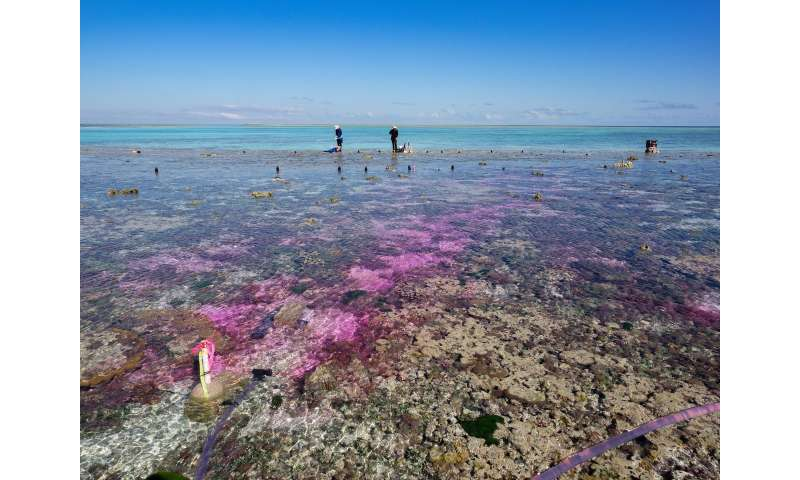 Coral Reef Experiment Shows Acidification From Carbon