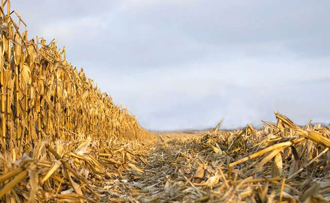 Cornfields could play a role in recycling old electronics