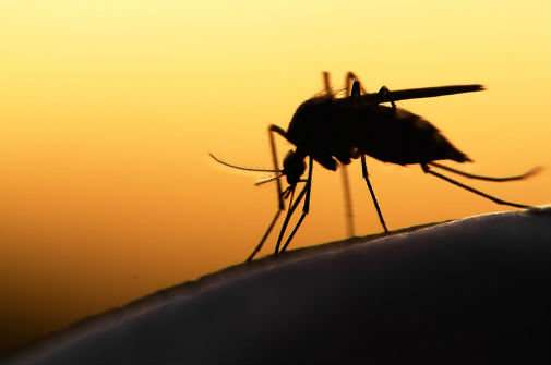 Could rising CO2 trigger return of eradicated mosquito-related disease?
