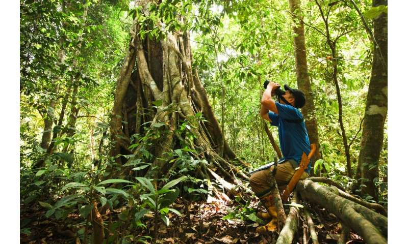 Counting Orangutan Nests to Estimate Orangutan Population