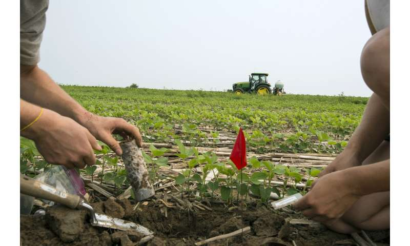 Cover crops in nitrogen's circle of life