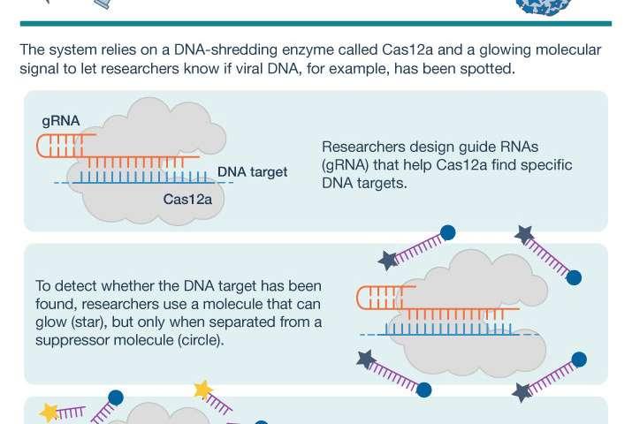 CRISPR-based technology can detect viral DNA