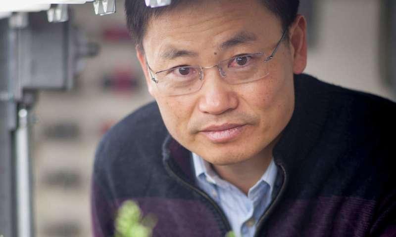 CRISPR-edited rice plants produce major boost in grain yield