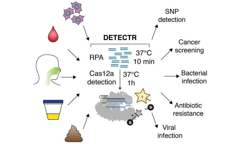 CRISPR scissors, Cas12a, enables cutting-edge diagnostics