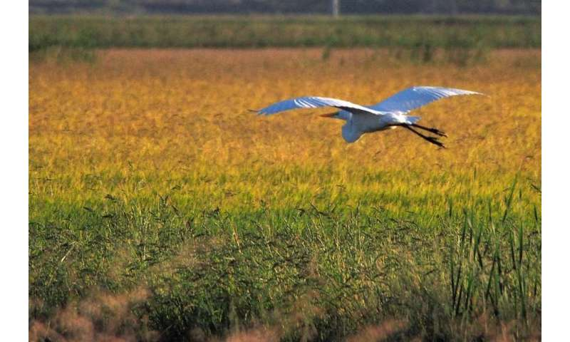 Crop insurance is good for farmers, but not always for the environment