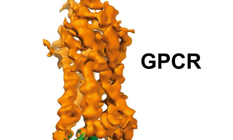 Cryo-EM reveals interaction between major drug targets