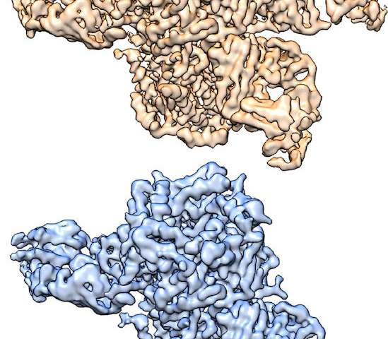 Cryo-EM structures of the nicotine receptor may lead to new therapies for addiction