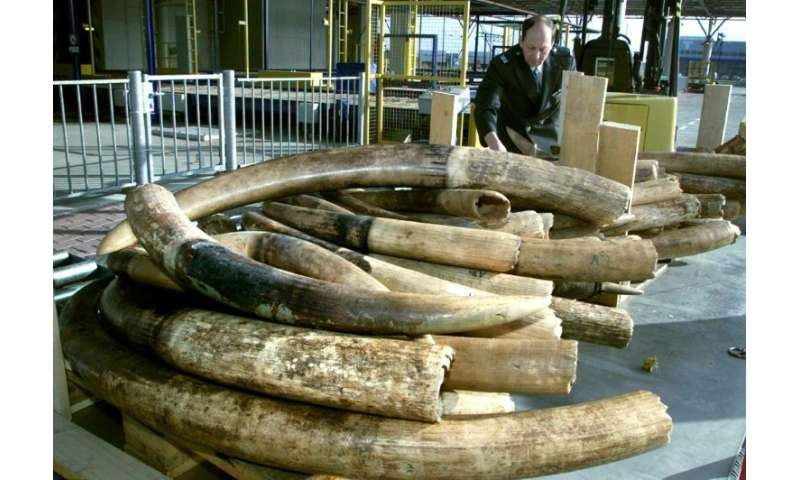 Dutch to ban raw ivory sales from 2019